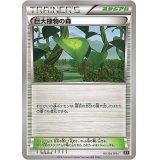 巨大植物の森【-】{016/018}