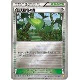 巨大植物の森【-】{127/131}