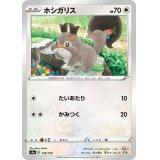 ホシガリス【-】{148/190}