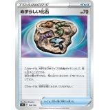 めずらしい化石【-】{165/190}